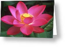 Lotus Blossom Greeting Card by Elvira Butler