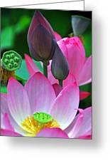Lotus Blossoms  Greeting Card