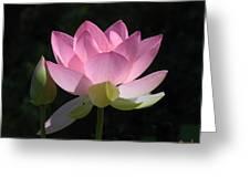 Lotus Bud--snuggle Bud Dl005 Greeting Card by Gerry Gantt