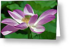 Lotus--center Of Being--protective Covering I Dl0087 Greeting Card