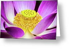 Lotus Central Detailed Greeting Card
