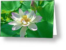 Lotus--fading I Dl0079 Greeting Card