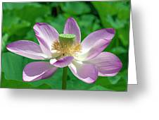 Lotus--fading IIi Dl0081 Greeting Card