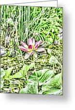 Lotus Flower Bloom In Pink 2 Greeting Card