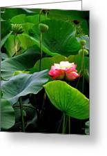Lotus Forms Greeting Card
