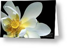 Lotus From Above Greeting Card