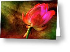 Lotus In Texture - A Present For A Friend Greeting Card