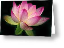 Lotus In The Limelight Greeting Card