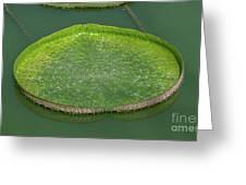 Lotus Leaf In The Marsh Greeting Card