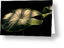 Lotus Leaves Morning  Shower Greeting Card