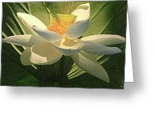 Lotus Light Greeting Card