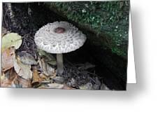 Lotus Mushroom Greeting Card