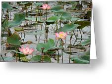 Lotus Pond-1 Greeting Card