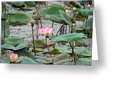 Lotus Pond -2 Greeting Card