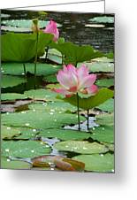 Lotus Pond #3 Greeting Card