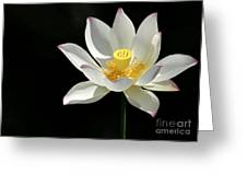 Lotus Reaching For The Sun Greeting Card