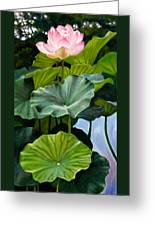 Lotus Rising Greeting Card