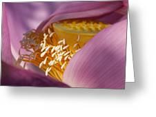 Lotus Seed Pod Greeting Card
