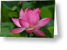 Lotus--shades Of Past And Future Dl029 Greeting Card by Gerry Gantt