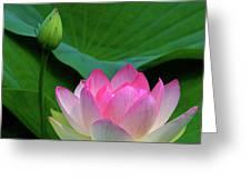Lotus Siblings Greeting Card