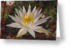 Lotus Uprising-  Debbie-may Greeting Card
