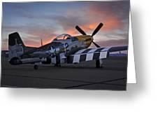 Lou Iv At Sunset Greeting Card