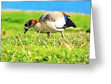 Loud Duck Colors Greeting Card