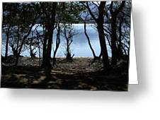 Lough Leane Through The Woods Greeting Card