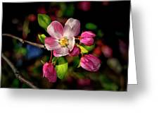Louisa Apple Blossom 001 Greeting Card