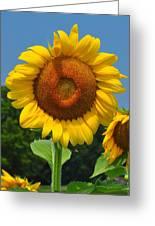 Louisa, Va. Sunflower 6 Greeting Card