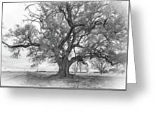 Louisiana Dreamin' Monochrome Greeting Card