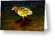Louisiana Heron Greeting Card