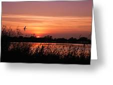 Louisiana Rice Field At Sunset Greeting Card