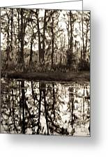 Louisiana Swamps 3 Greeting Card
