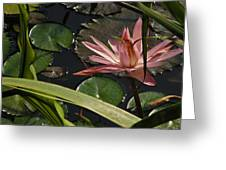 Louisiana Waterlilly Greeting Card