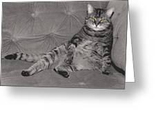 Lounge Cat Greeting Card