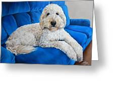 Lounging Goldendoodle  Greeting Card