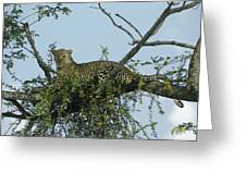 Lounging Leopard Greeting Card