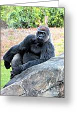 Lounging On This Rock Greeting Card