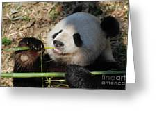 Lovable Giant Panda Bear With Big Paws Greeting Card