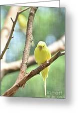 Lovable Little Budgie Parakeet Living In Nature Greeting Card