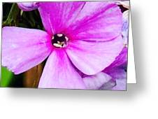 Love Any Pink Flower  Greeting Card