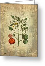 Love Apple Botanical  Greeting Card