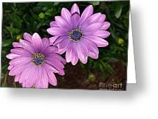 Love Daisies Greeting Card