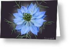 Love In A Mist Black With Light Greeting Card