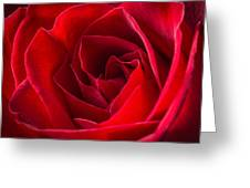 Love Is A Red Rose Greeting Card