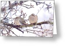 Love Is In The Air - Mourning Dove Couple Greeting Card