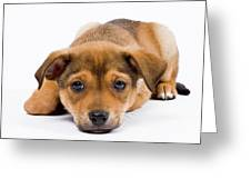 Love Me Puppy Greeting Card