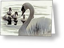 Love Of Mother Swan Greeting Card