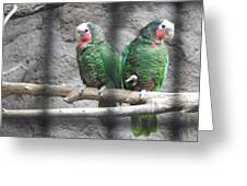 Love Parrots Greeting Card